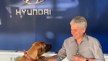 car dealership dog