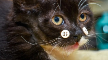 image of a cat with buttons on its face