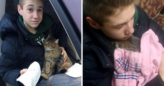 boy saves cat, teen saves cat