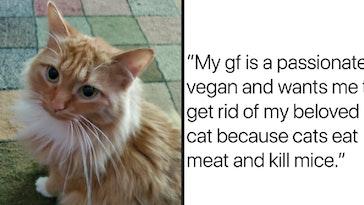 vegan girlfriend cat ultimatum